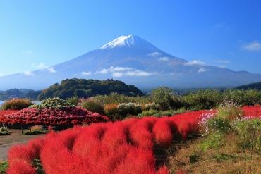 秋季不只楓葉、銀杏,到日本一賞紅通通的可愛掃帚草!