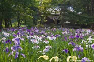 世界文化遺産の地で感じる日本の歴史!東京から岩手をまわる5泊6日のおすすめ観光コース
