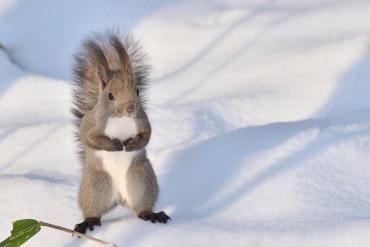 拍照PO上網絕對會成為大家注目的焦點!在北海道可以遇見超可愛的動物們!