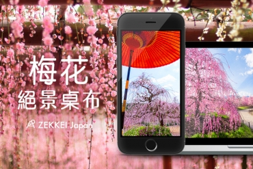 <絕景桌布>告知春來訪-梅花絕景桌布大放送!