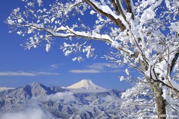 赏美景迎新年!精选五处净化心灵的新年参拜景点
