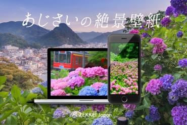 【絕景桌布】梅雨季中唯美紫陽花絕景桌布大放送!
