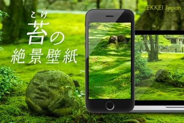 <絶景壁紙>癒しの苔の絶景をあなたの待ち受けに