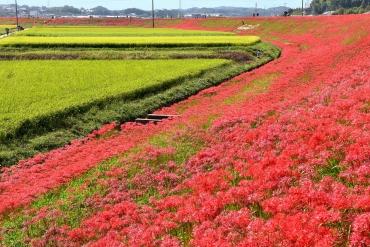 秋の散歩にぴったり!彼岸花と童話の世界をめぐる愛知県の半田市1日観光コース