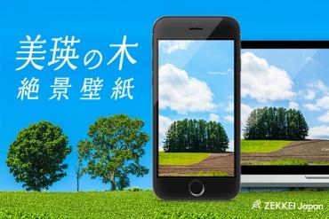 【絶景壁紙】北海道・美瑛のなだらかな丘に立つ「木々」の壁紙