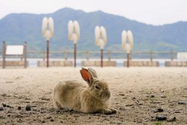 うさぎに戦争遺跡に!大久野島(広島県)を満喫する2大ポイント