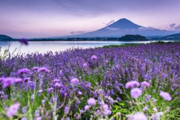 Pemandangan indah Gunung Fuji dalam 12 bulan  : Yang mana menurut kamu yang terbaik?