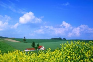 【日本。夏之北海道】美瑛精選5大景點   跟著我走   琳許