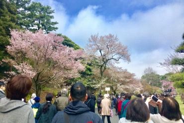 【行ってきた】皇居の桜2019!待ち時間・混雑情報と桜の様子を時系列でご紹介!