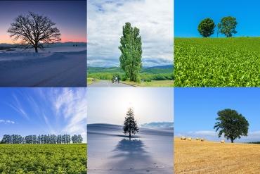 「ケンとメリーの木」の由来は?北海道・美瑛のユニークな6本の木