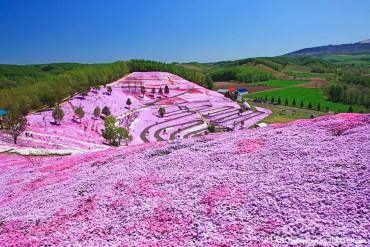 5 shibazakura (moss phlox) great views: flower fields like a dream