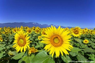 【夏日限定絕景】10大讓人有滿滿戀愛感的日本夏日風物詩!