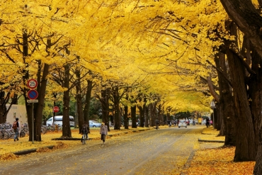 6 famous autumn leaves spots in Sapporo to visit this year
