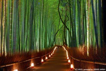 日本的冬季太美了!享誉世界的日本五大十二月美景