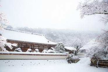 東京賞雪就來這! 精選鎌倉難得一見的4大絕美雪景