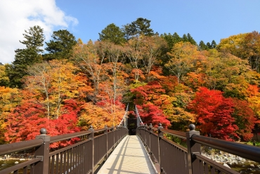 Ba khung cảnh thưởng ngoạn lá đỏ nổi tiếng ở Tochigi・Nasu!  Dòng thác · Ropeway · cây cầu treo với cảnh sắc thu.