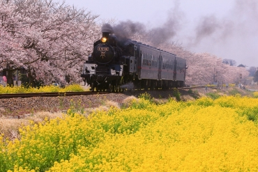 春花爛漫! 精選日本5處與油菜花共演的極致絕景