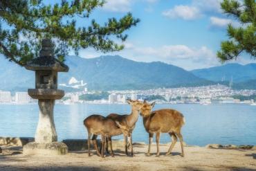 動物控必訪!精選日本4處與動物零距離的療癒景點