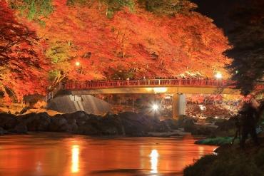 """令人感动的秋季邂逅之旅 日本五大最值得观光的""""11月美景"""""""