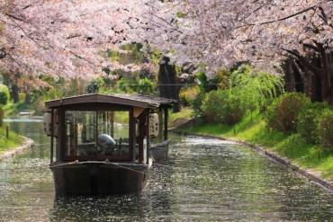 京都の桜は船上から愛でる!おすすめお花見船5選