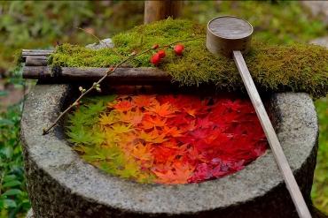 京都寺廟超唯美景緻「花朵浮在水手舍上」!