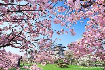 6 magnificent cherry blossom spots in Hokkaido