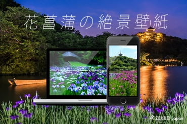 【絶景壁紙】和の風情を感じる「花菖蒲」の壁紙をあなたの待ち受けに!