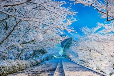 桜の名所が冬に見せる雪景色が、幻想的な美しさ!
