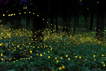 4 scenic spots where you can enjoy Japan's early summer to the fullest with fireflies with pale light!