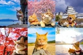 Traveling kitty cats throughout Japan, Daikichi & Fuku chan