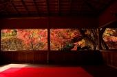 """Chỉ 100 người mỗi ngày!!! Hãy tận hưởng phong cảnh ngoạn mục, hiếm hoi của mùa thu ở thung lũng lá đỏ """"Hakuryuen"""" - Kyoto"""