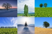 """What's the story behind the """"Ken and Mary's Tree""""? The unique 6 trees of Biei, Hokkaido."""