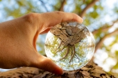 Some mystical pictures of upside down landscape, looking through crystal balls