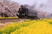 春爛漫!菜の花とのコラボレーションが美しい絶景5選