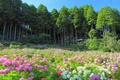 10 pemandangan luar biasa yang nyaman untuk dikunjungi pada bulan Juni