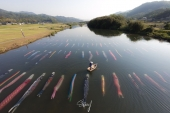 "More than 100 carp streamers swimming in a river! ""Carp streamers in the water"" of Sabagawa river."