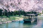 搭船賞櫻趣! 嚴選「京都」5大浪漫賞櫻遊船