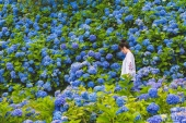 7大繡球花絕景拍攝秘訣! 拍下日本夏季限定美照