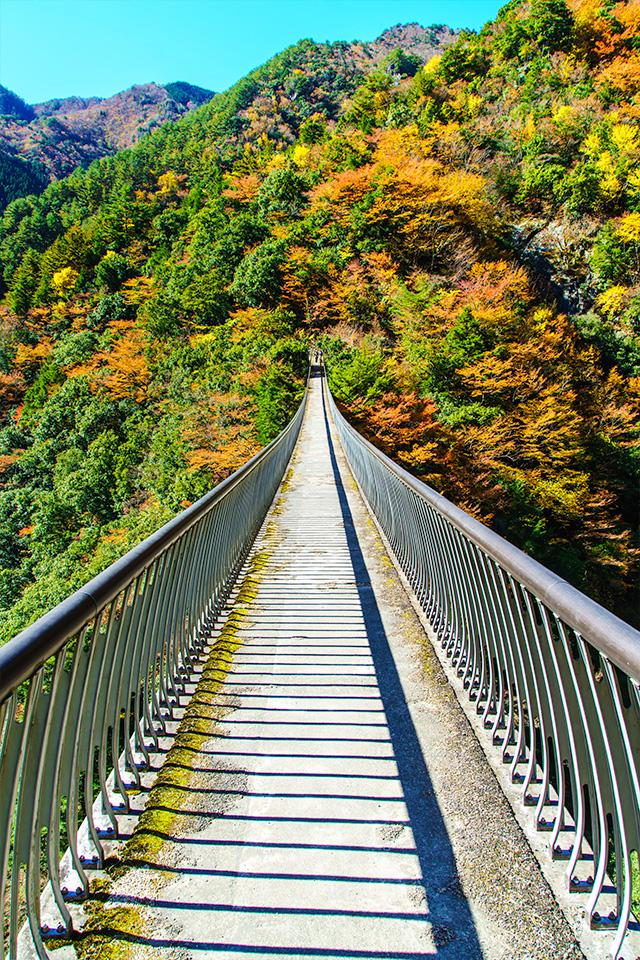 梅の木轟(うめのきとどろ)公園吊橋
