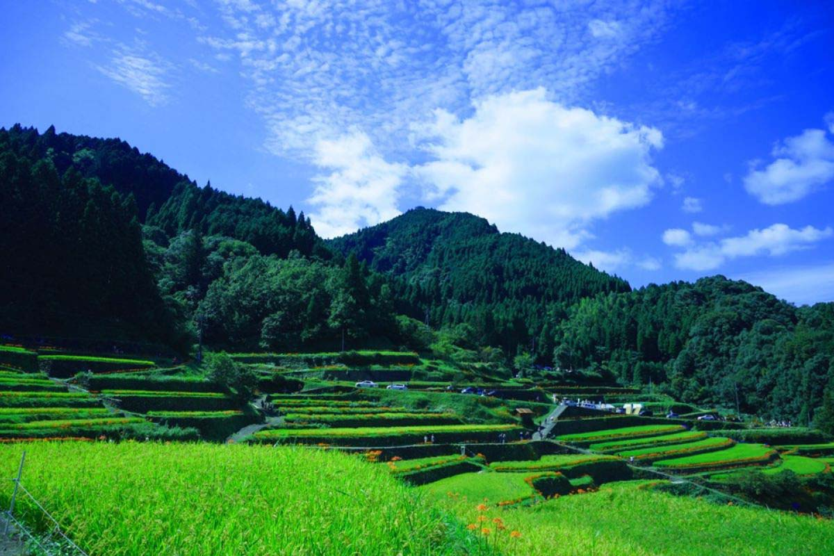 Tsuzura Rice Terrace