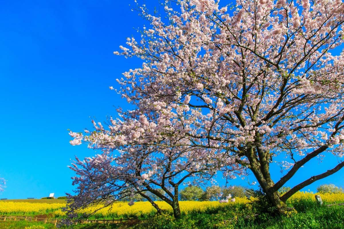 白木蜂高原