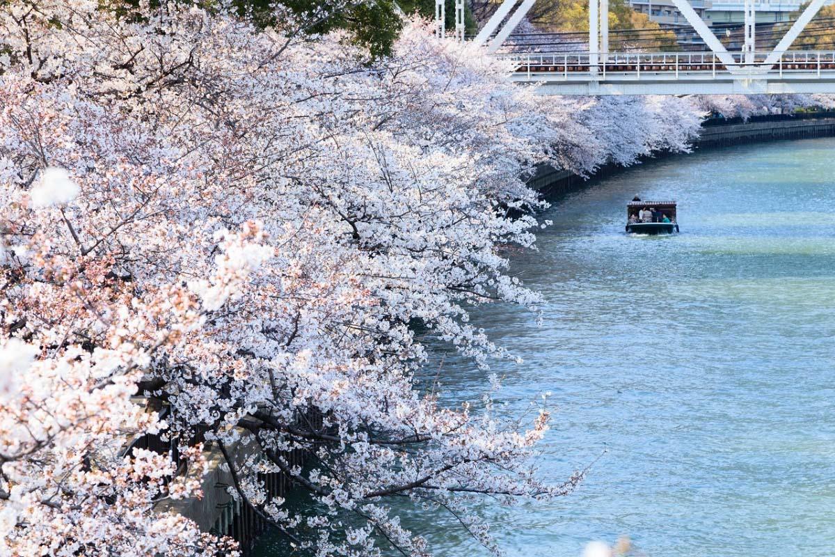 Kema Sakuranomiya Park