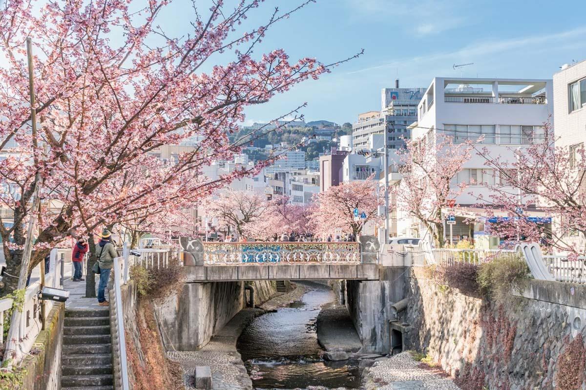 Lễ hội Sakura trên dòng sông atami Sakura Itokawa