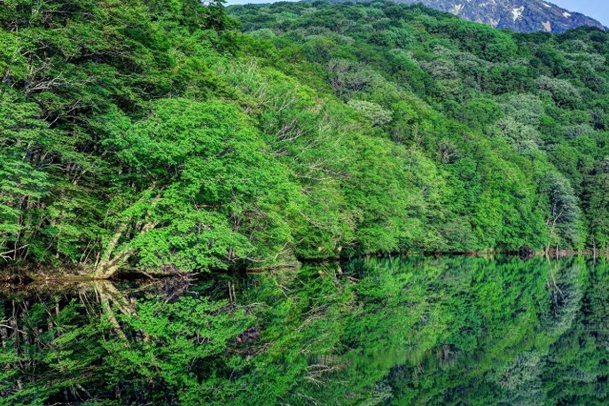 Tsutanuma