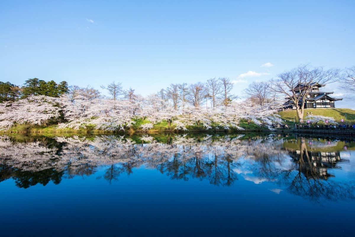 高田公園之櫻