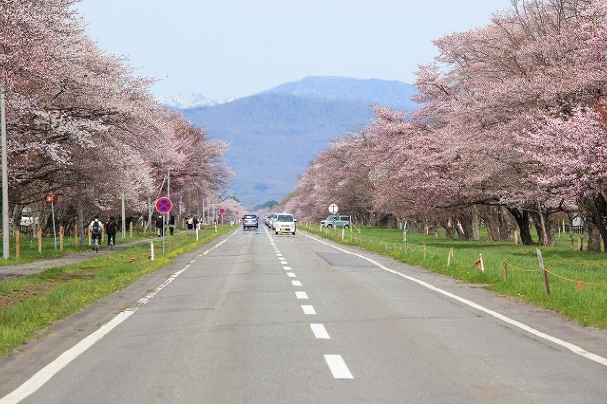 Con đường hoa anh đào Nijukken