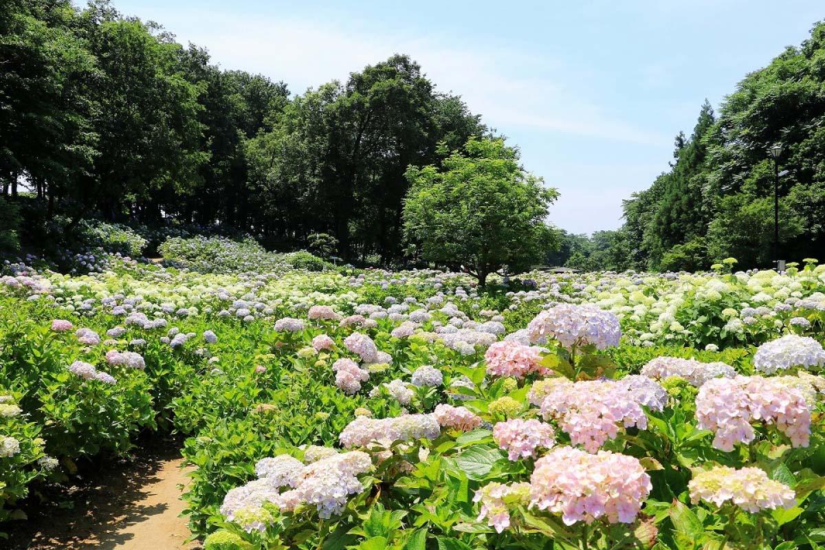 荻窪公園(道の駅「赤城の恵み」)