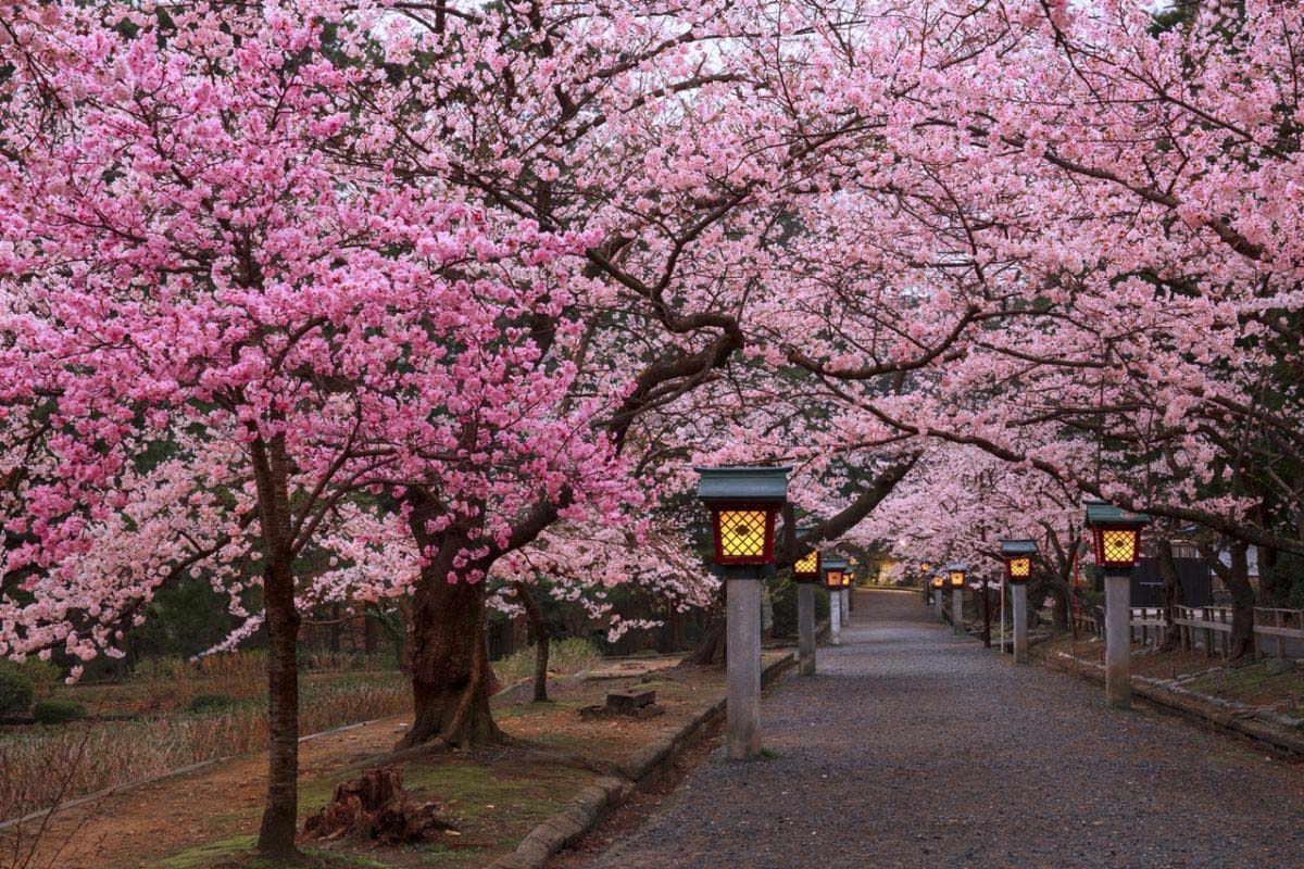 Yahiko Park