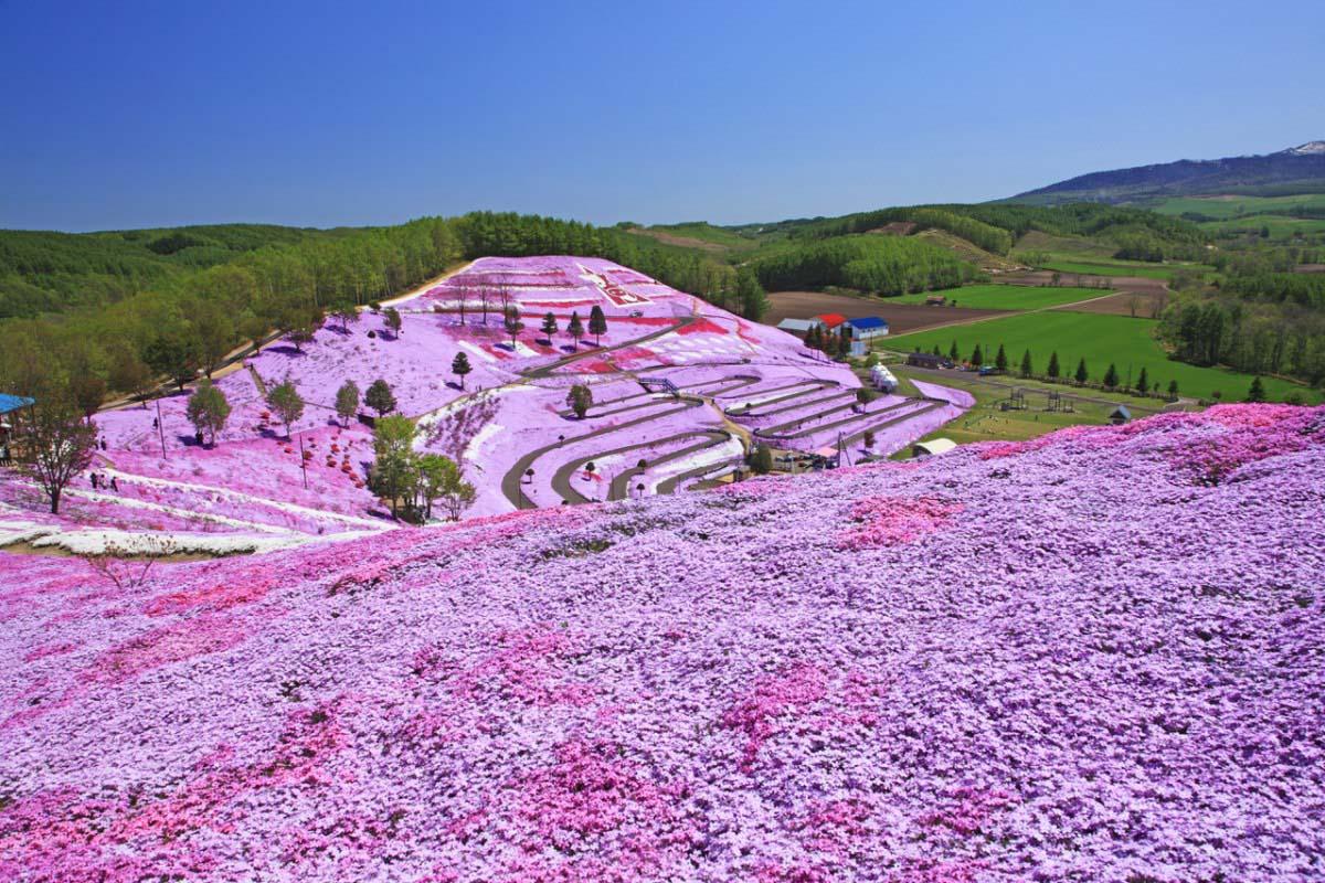 Higashimokoto Moss Pink Park