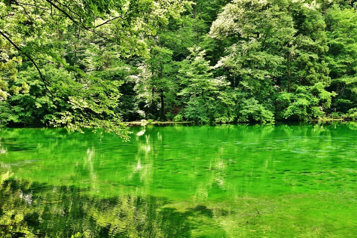 Ryugakubo Pond